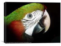 Young macaw eye, Canvas Print