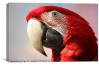 Green wing macaw, Canvas Print