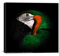 Green and Gold macaw portrait, Canvas Print