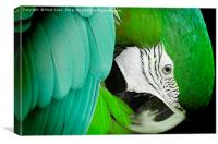 Green macaw, Canvas Print