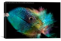 Parrot,fish or feather, Canvas Print