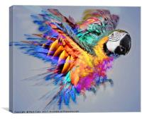 Macaw colour burst, Canvas Print