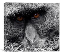 Meaningful eyes, Canvas Print