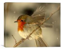 Fly Away Robin, Canvas Print