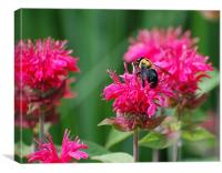 Bee and Pink Flower, Canvas Print