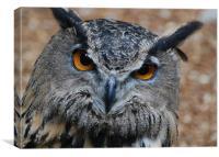 Asian Owl, Canvas Print
