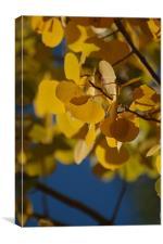 Golden Aspen Leaves, Canvas Print