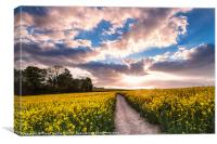 Eynsford Fields, Canvas Print