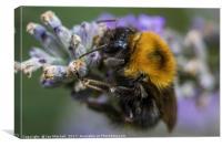 Bees Knees, Canvas Print