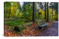 Autumn Forest Walks, Canvas Print