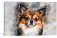 Chihuahua, Canvas Print