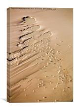 Seagulls on the Beach, Canvas Print