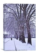 Trees in Winter, Canvas Print