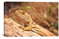 Madagascar Lizard #1, Canvas Print