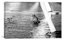 Sparrow in the Fountain, Canvas Print