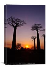 Madagascar Baobabs, Canvas Print