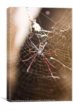 Madagascar Spider, Canvas Print