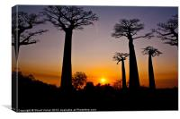 Madagascar Baobabs #2, Canvas Print