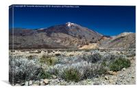 Mount Teide, Canvas Print