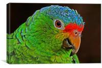 Colourful Parrot, Canvas Print