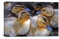 Cuddling Ducklings, Canvas Print