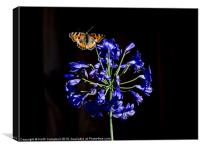 Butterfly on Agapanthus, Canvas Print