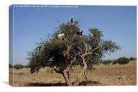 Tree Goats, Canvas Print