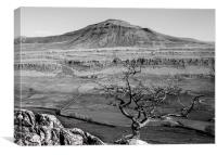 Ingleborough from Twistleton, Canvas Print