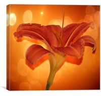 Day lily by JCstudios 2015, Canvas Print