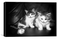 Smudge (Left) Blotch (Right) and Fifi by JCstudio, Canvas Print