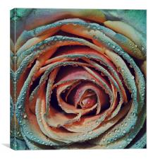 Multi coloured wetness by JCstudios, Canvas Print