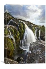 Loup of Fintry in portrait , Canvas Print