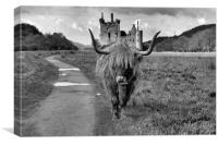 Katie the Highland Coo at a Loch Awe castle mono, Canvas Print