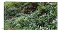 Wild garlic welsh woodland 8833, Canvas Print