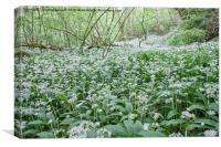 Wild garlic welsh woodland 8845, Canvas Print