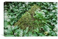 white green mossy rock 8857, Canvas Print