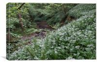 woodland stream wild garlic 8883, Canvas Print