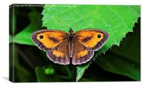 Gatekeeper Butterfly.., Canvas Print