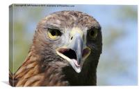 Portrait of a Golden Eagle , Canvas Print