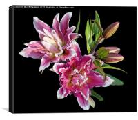 Arty Lilies, Canvas Print