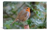 Yet another British Robin , Canvas Print