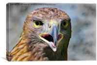 Portrait of a Golden Eagle, Canvas Print