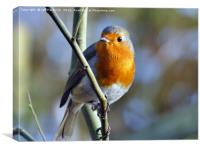 British Robin, Canvas Print