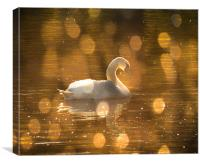 Swan on golden pond, Canvas Print