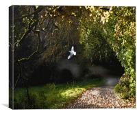 Magical Woods, Canvas Print