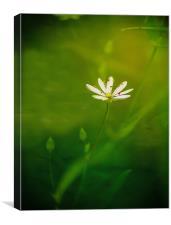 Une belle petite fleur, Canvas Print
