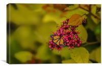 Butterfly Dreams, Canvas Print