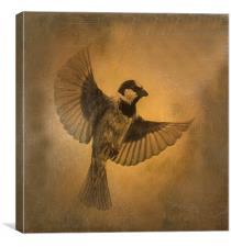 Flight of the Sparrow, Canvas Print