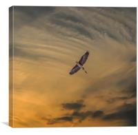 Heron southbound, Canvas Print
