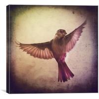 Sparrow à lancienne fenêtre, Canvas Print